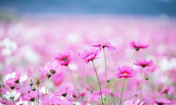 cambio_flores
